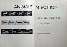 Animals in motion.